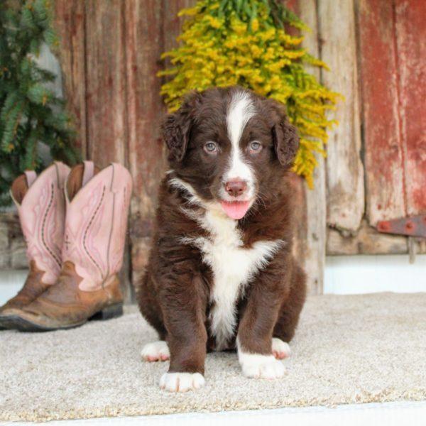 Tilly 2