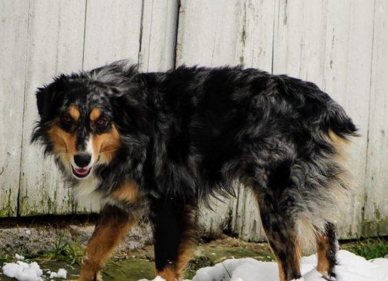 Roscoe (1)